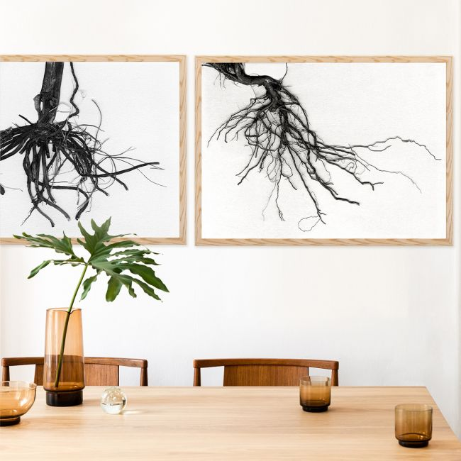 Root Collection