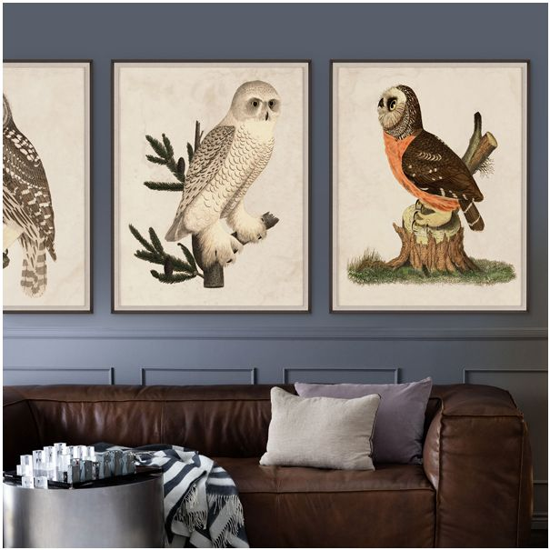 Banzanini Owls