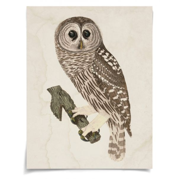 Banzanini Owl 3: Unframed Ready to Ship 42x54""