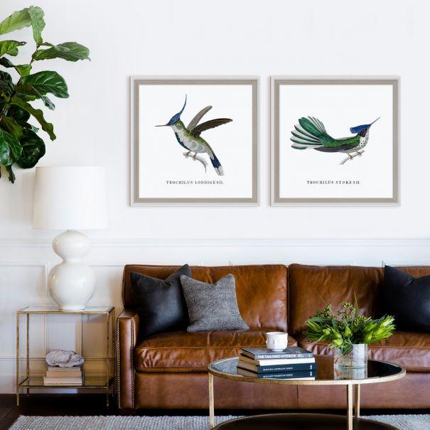 Bartholomew Hummingbirds