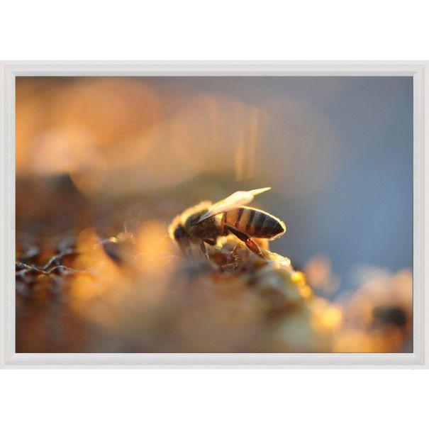 Bees No. 2