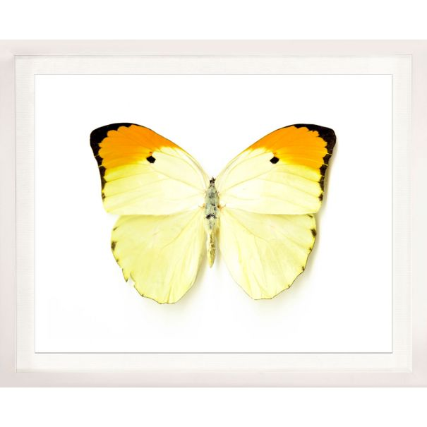 Butterfly Photograph No. 5