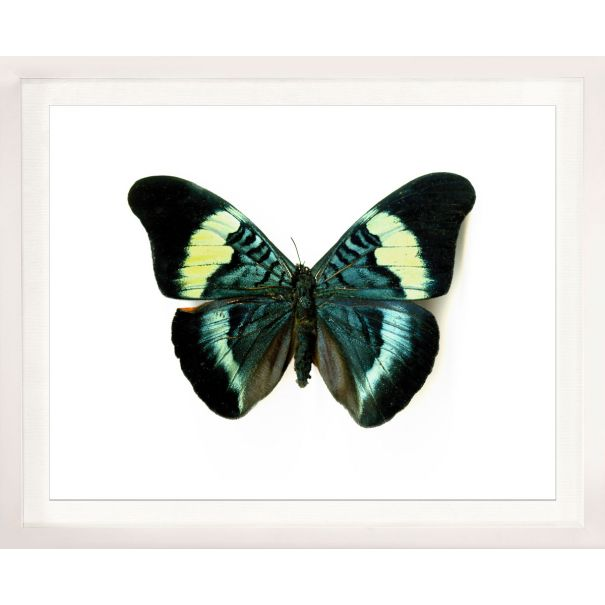 Butterfly Photograph No. 8