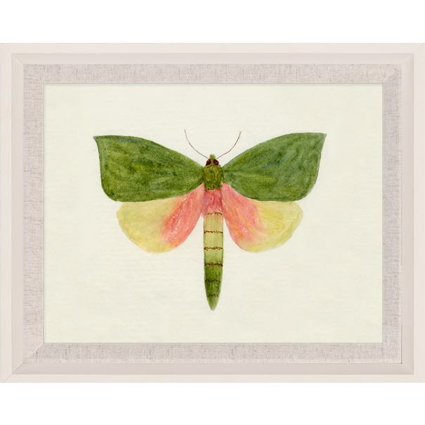 Hubbard Butterfly, Small: 146