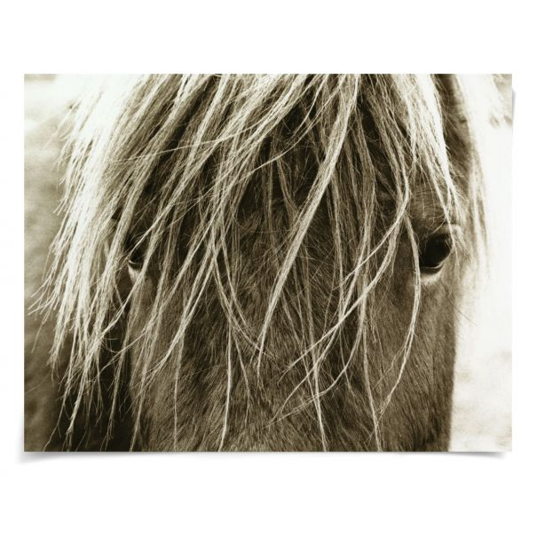 Hyden Horses: Blonde: Unframed Ready to Ship 54x42""
