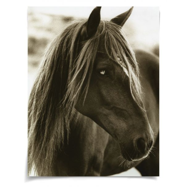 Hyden Horses: Pensive: Unframed Ready to Ship 42x54""