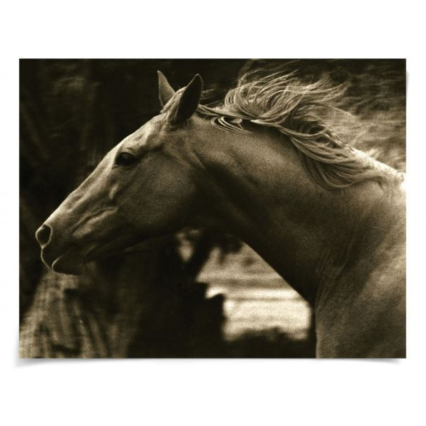 Hyden Horses: Running: Unframed Ready to Ship 54x42