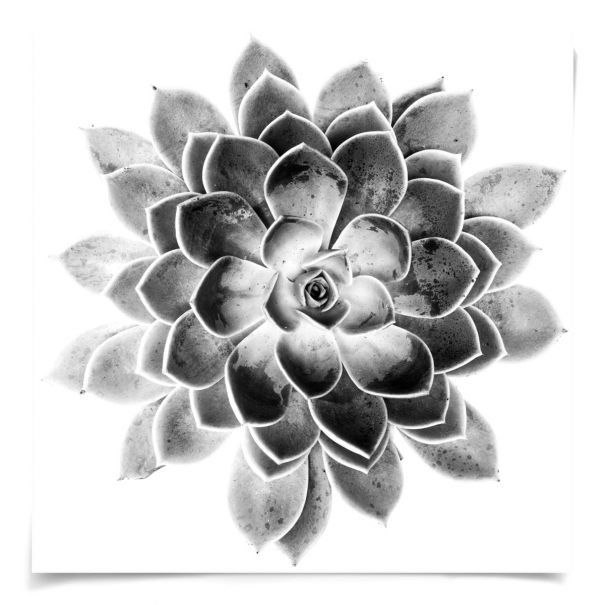 Black & White Succulent 2: Unframed Ready to Ship 29x29""