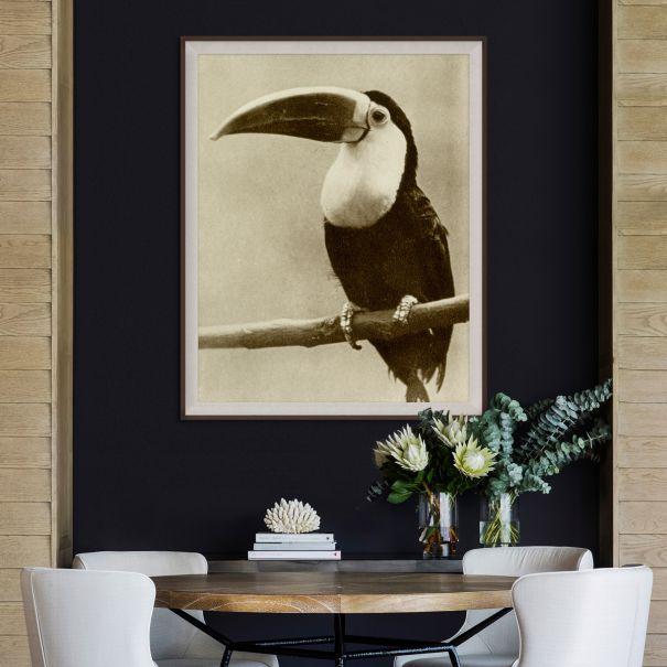 Thinking Toucan