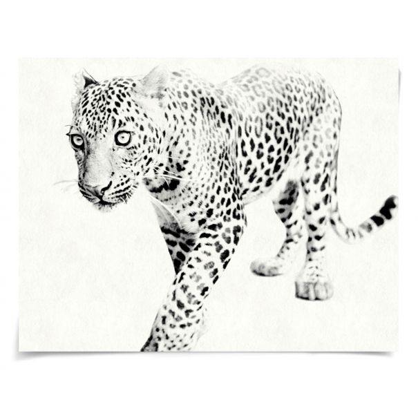 Tylinek Leopard: Unframed Ready to Ship 54x42""