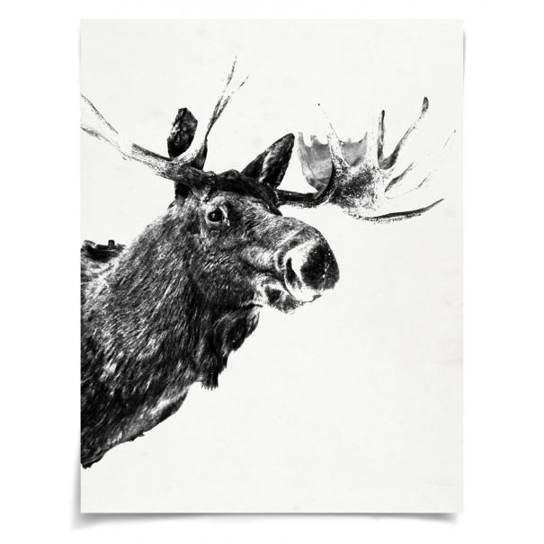 Tylinek Moose: Unframed Ready to Ship 54x42""