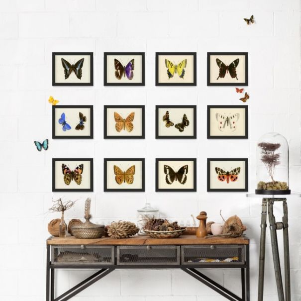 Hubbard Butterflies, Small