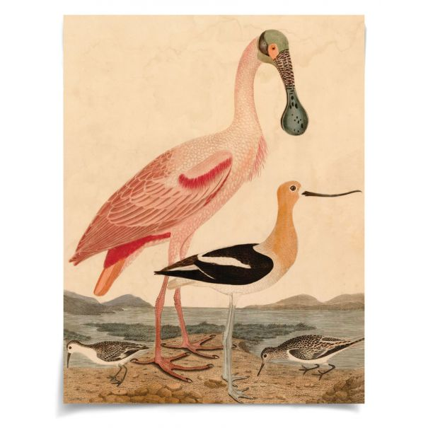 Warnicke Spoonbill: Unframed Ready to Ship 42x54""