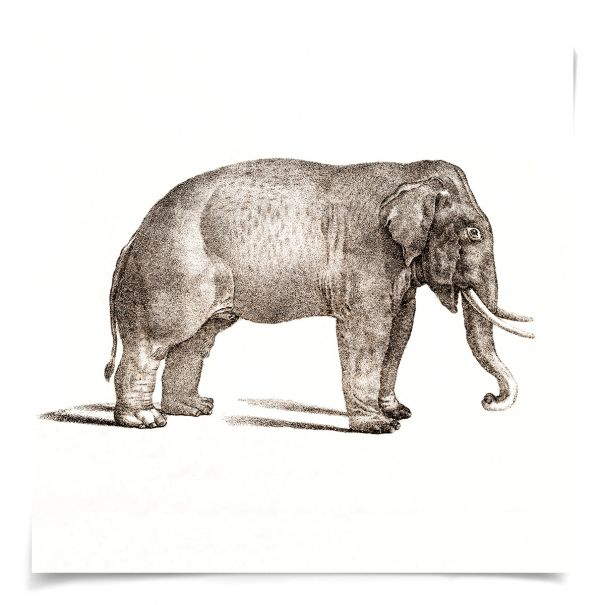 Young Animals: Elephant: Unframed Ready to Ship 14x14""