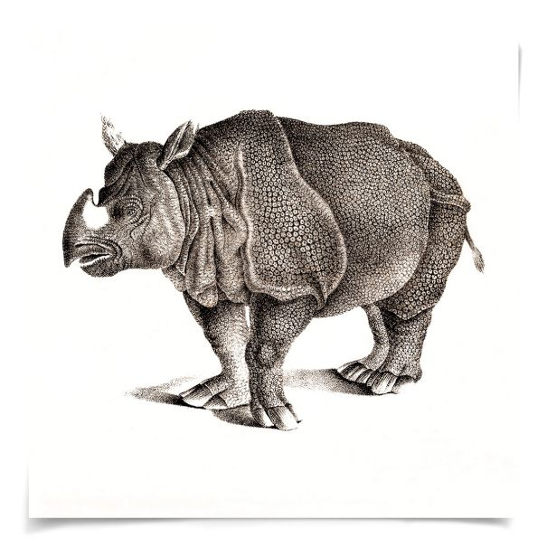 Young Animals: Rhino: Unframed Ready to Ship 14x14""