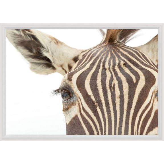 Animals 16