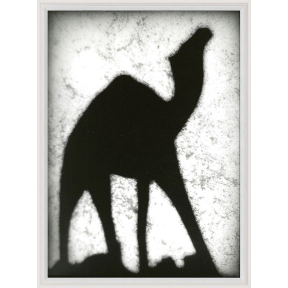 Animal Shadow No. 11