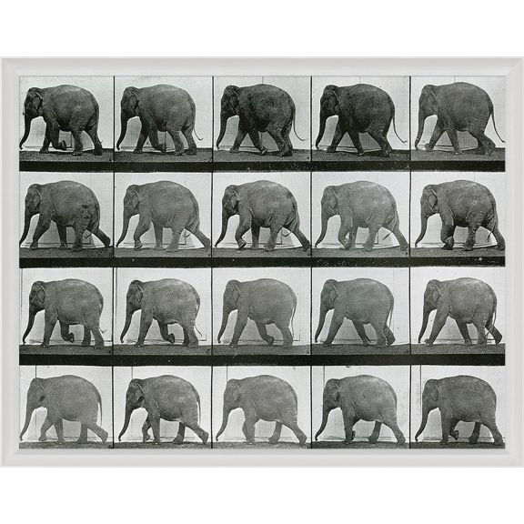 Animals in Motion, Elephant
