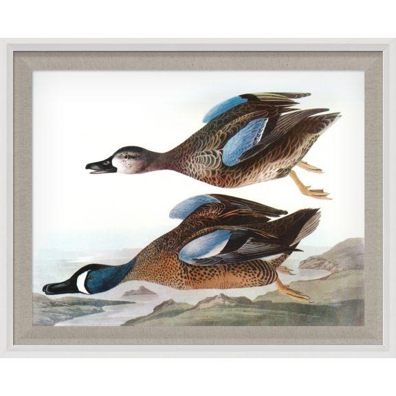 Audubon Ducks 10
