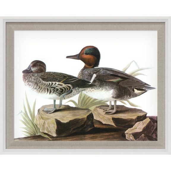 Audubon Ducks 4