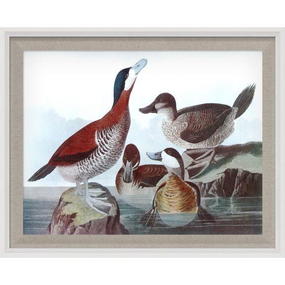 Audubon Ducks 7