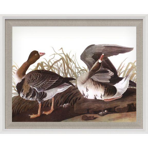 Audubon Ducks 8