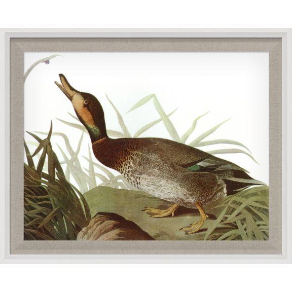Audubon Ducks 9