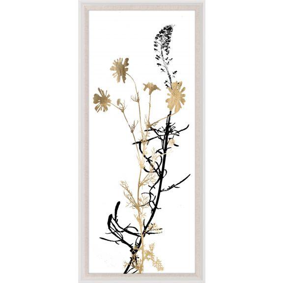 Black & White Herbarium 4