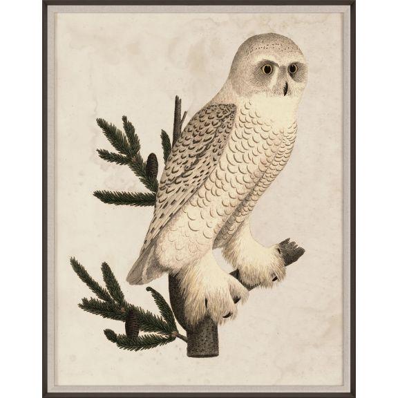 Banzanini Owl 1