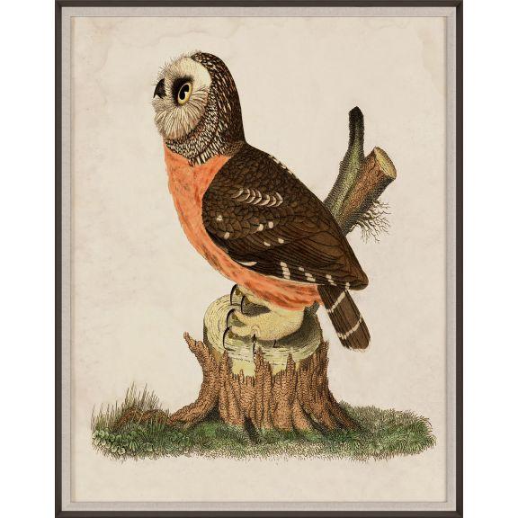 Banzanini Owl 2