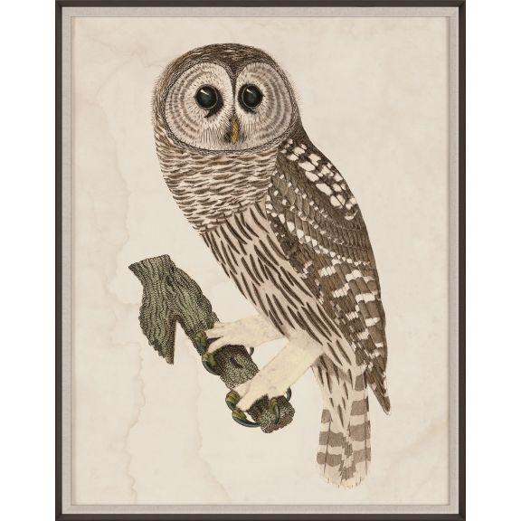 Banzanini Owl 3