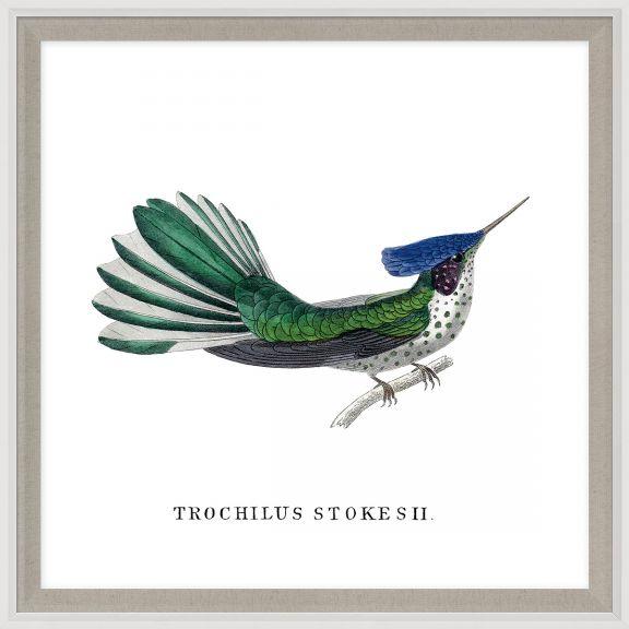Bartholomew's Hummingbirds 1