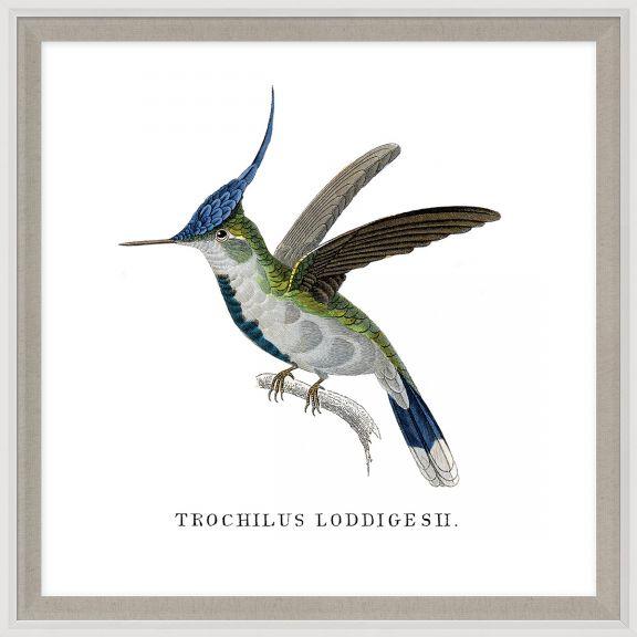 Bartholomew's Hummingbirds 2