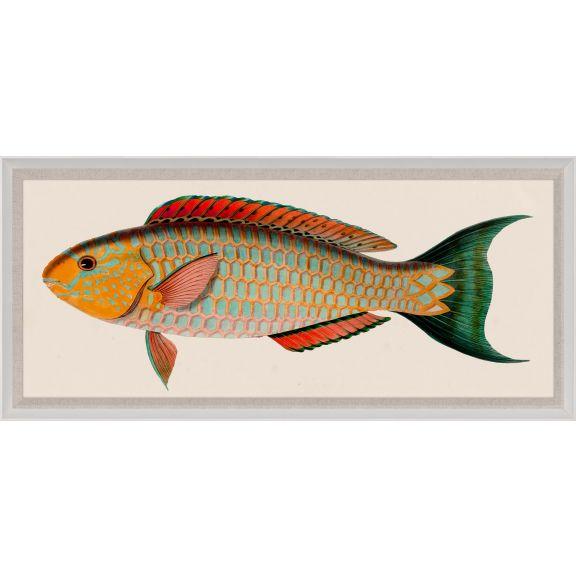Bennet Fish 1