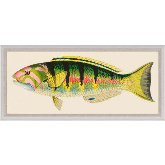 Bennet Fish 3