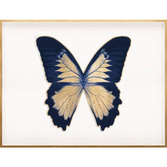 Butterfly Royale, Blue 2 Framed