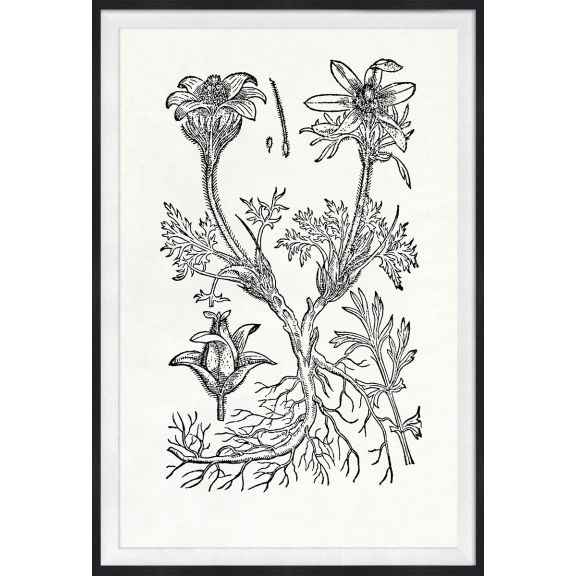 Botanical Study, Series 1, 2