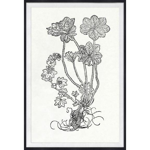 Botanical Study, Series 1, 3