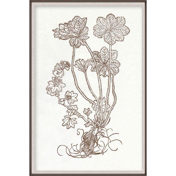 Botanical Study, Series 2, 2