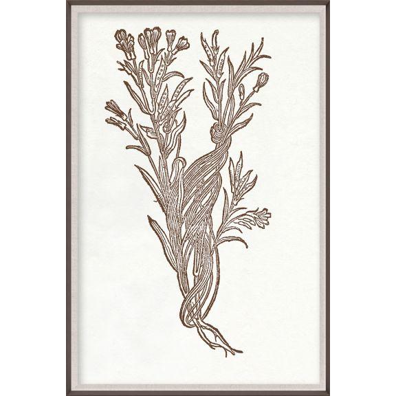Botanical Study, Series 2, 3
