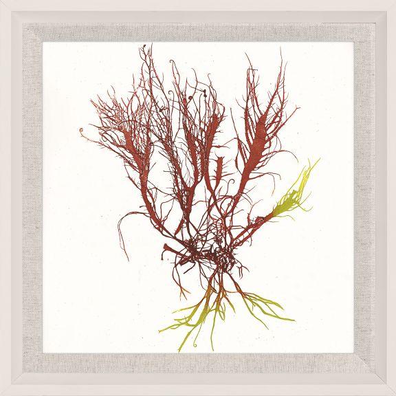 Bradbury Seaweeds 14