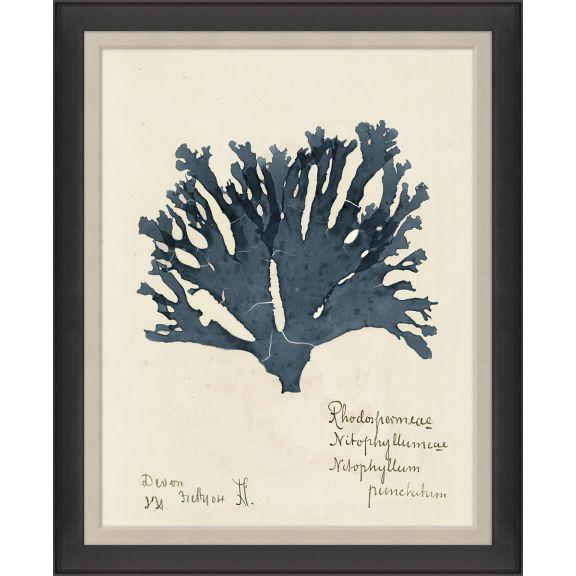 Capistrano Seaweed Large 1, Midnight Blue