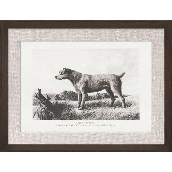 Cassell Dogs; Irish Terrier