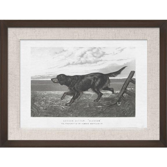 Cassell Dogs; Gordon Setter