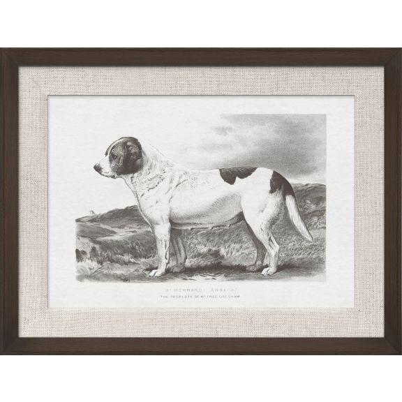 Cassell Dogs; St. Bernard