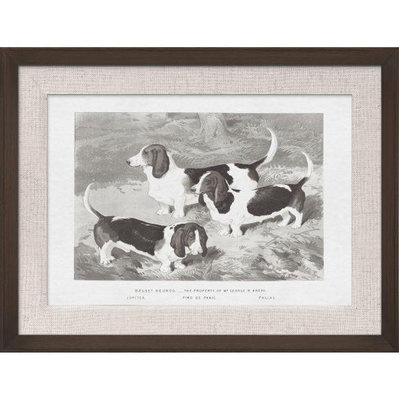 Cassell Dogs; Basset Hounds