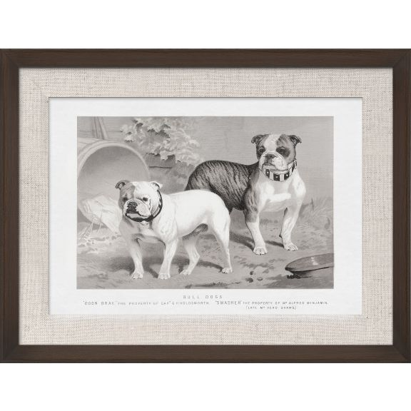 Cassell Dogs; Bull Dogs