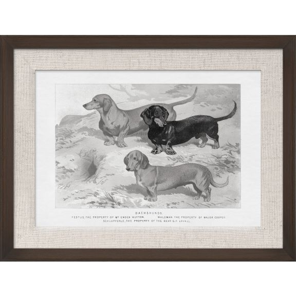 Cassell Dogs; Dachshunds