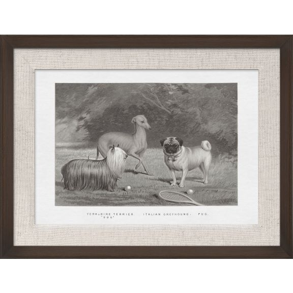 Cassell Dogs; Yorkshire Terrier, Greyhound, & Pug