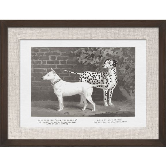 Cassell Dogs; Bull Terrier & Dalmation